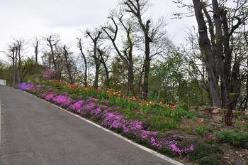 20130518_flower01.jpg