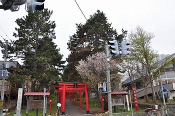 20130518_sakura09.jpg